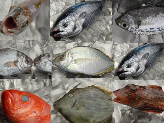 小田原の魚